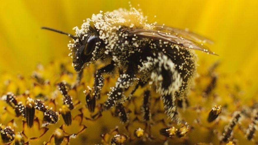 Bee Pollen Health Benefits Depend on Several Factors